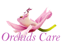 Orchids Care